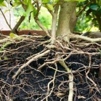 Cómo conseguir plantas gratis para tu jardín