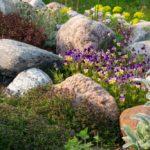 Como diseñar un jardin de rocas. Parte 2