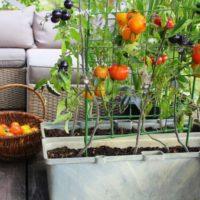 Cultiva tu propia despensa gratis. Nueva tendencia en Jardinería