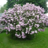 Descubre gratis los arboles y arbustos que te reducen la factura de la luz