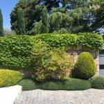 Mantenimiento de Proyecto de Jardinería y paisajismo para un edificio de oficinas en Madrid Entrada