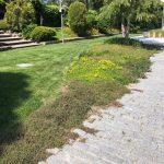 Mantenimiento de Proyecto de Jardinería y paisajismo para un edificio de oficinas en Madrid viales