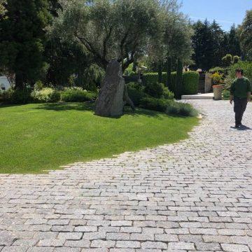 Mantenimiento de Proyecto de Jardinería y paisajismo para un edificio de oficinas en Madrid macizo arbolado