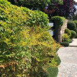Mantenimiento de Proyecto de Jardinería y paisajismo para un edificio de oficinas en Madrid detalle en valla perimetral