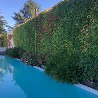 Mantenimiento de Proyecto de Jardinería. Unifamiliar en La Moraleja. Madrid (1)