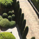 Mantenimiento-de-Proyecto-de-Jardineríaen-chalet-unifamiliar-en--La-Moraleja-de-Madrid Arboles en linea