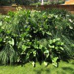 Mantenimiento de jardín para vivienda privada en La Moraleja de Madrid Macizos de calas