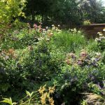 Mantenimiento de jardín para vivienda privada en La Moraleja de Madrid Jardin Natural 1