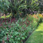 Mantenimiento de jardín para vivienda privada en La Moraleja de Madrid Macizos monovarietales 4