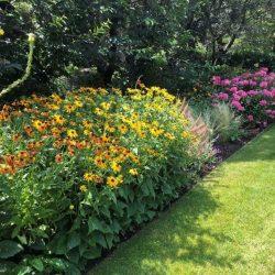 Mantenimiento de jardín para vivienda privada en La Moraleja de Madrid Macizos monovarietales 1