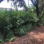Mantenimiento de jardín para vivienda privada en La Moraleja de Madrid Jardin Natural Macizo