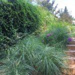 Mantenimiento de jardín para vivienda privada en La Moraleja de Madrid Jardin Natural bajada