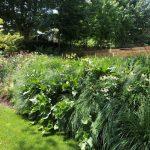 Mantenimiento de jardín para vivienda privada en La Moraleja de Madrid Jardin Natural Chulo 2