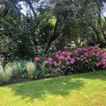 Mantenimiento de jardín para vivienda privada en La Moraleja de Madrid Macizos monovarietales 3