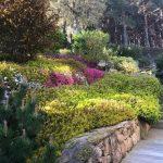 Mantenimiento de jardin en Becerril Sierra-Obras-Mantenimiento-jardines-Madrid-Jardinea