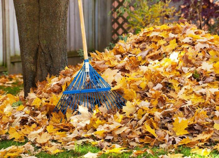 Que hacer con las hojas caidas en otoño jardineros profesionales en madrid. Monton de hojas