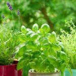jardin de hierbas de exterior